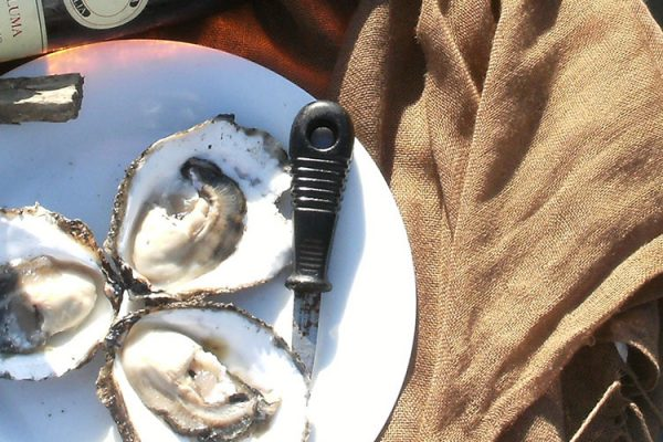 oyster-experience